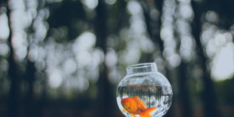 Patrzenie na rybki w akwarium uspokaja?