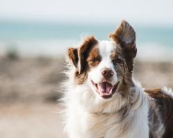 Psi diagnosta